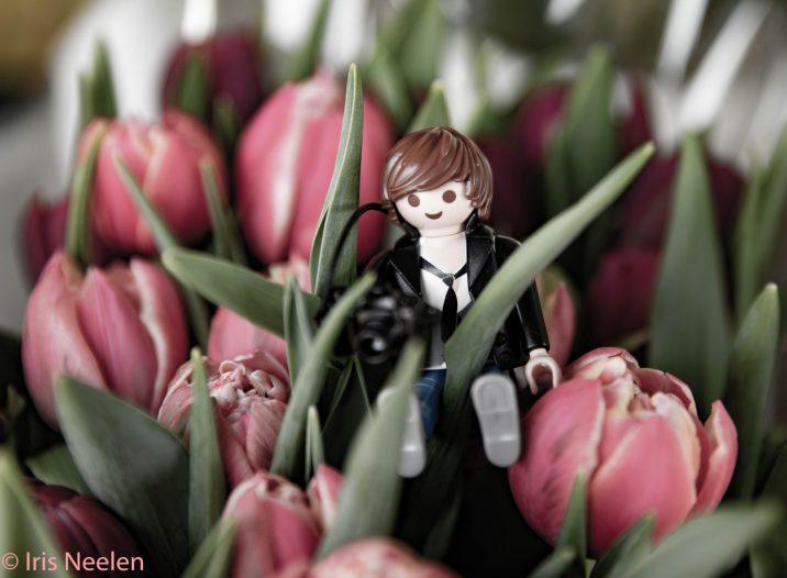 Tulpenbildner