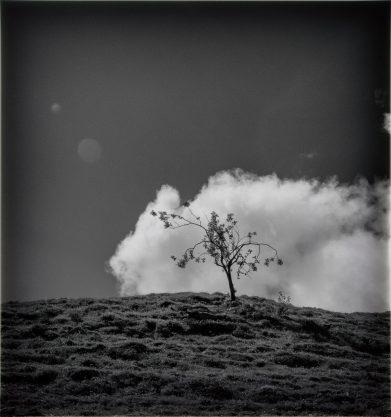 Wolkenbaum